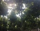 出售郑州周边荥阳土地荥广路南水北调干渠170亩庄园