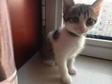 自己生的小猫找好人家送样