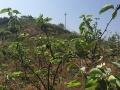 重庆涪陵新妙镇150亩果园转让包含果园内房屋有证
