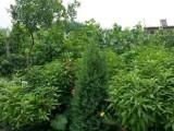 银川市西夏区国营林场13亩葡萄园,房屋 棚舍出租