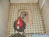 中山东升吸粪 清理化粪池 清理下水管道