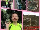 端午节小假期神湾自驾游上山摘正宗神湾菠萝