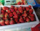 盘锦兴隆台草莓采摘农家院 口碑好