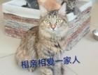 小紅門寵物寄養貓狗單獨寄養長期寄養托管寵物可接送