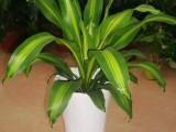 办公室绿植养护