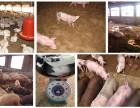 新郑益富源养猪专用发酵床厂家直销