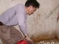 齐鲁高压清洗管道、抽粪池、疏通下水道