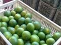 实在人代办湖北宜昌早熟蜜橘橘子