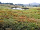 千亩农场转让超大放牧面积天然鱼塘土鸡猪羊散养龙虾养殖地势平坦