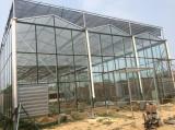哪里有提供好用的文洛型温室,山东文洛型温室工程