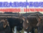 德州肉驴加盟 农业用具 投资金额 1-5万元