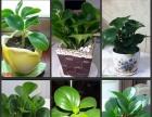 广州专业绿植租摆,单位租花,园林绿化,绿植花卉