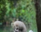 专业的宠物美容学校----杭州爱可学校开班啦