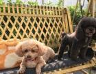 猫妈之家顺碧带小花园猫狗家庭寄养洗澡
