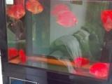 下出水缸带鹦鹉鱼