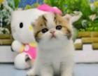 长春哪里有猫舍出售纯种波斯猫 无病 无癣 协议质保欢迎选购