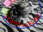 自家猫舍繁育一窝虎斑 包纯种 包健康