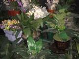 苏州活动会议开业庆典鲜花绿植出售出租摆放