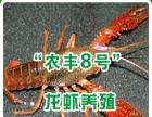 供应泥鳅,龙虾种苗,培训养殖技技术