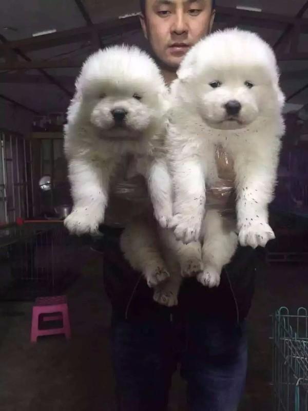 本人从事宠物狗繁殖,要改行了,小狗全部低价处理