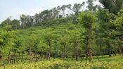 边坡绿化修复客土喷播专用土壤粘合剂厂家直销