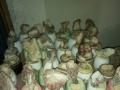 根雕,奇石,珊瑚,海螺,多肉等全部特价处理