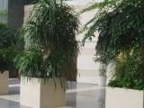 太原花卉租摆,太原绿植租赁养护设计,植物批发养护