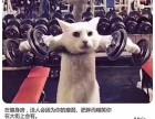 亳州健身教练培训哪里好