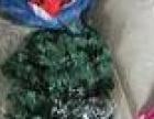 圣诞服,帽子,树和挂饰一起出了