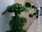 武清区花卉租赁办公室绿植租赁服务公司