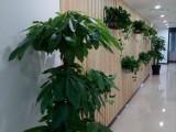 天津市绿植租赁花卉租赁办公室绿植租摆公司