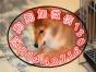 国内较大繁殖基地 出售双血统日系柴犬 证书齐全