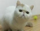 公母选择【极品加菲猫 包养活 支持视频】