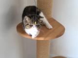 廣東廣州加菲貓幼崽怎么買