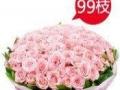 七夕情人节银川玫瑰之约