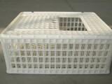 厂家直销成鸡筐 青年鸡周转筐 方形运输鸡筐 塑料鸡笼厂家