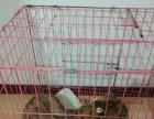 自家养的4个月的小狗灵提1500元出售