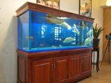北京易租摆鱼缸租赁鱼缸租摆红木鱼缸租赁每天10米