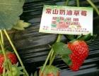 常山奶油草莓采摘园