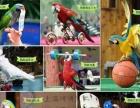 百鸟展主题布场百鸟园展鹦鹉互动马戏团动物演出大咖秀