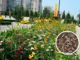 野花組合花種的撒播及花期