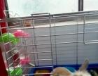 自家的宠物兔子
