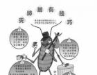 专业除虫灭蚁 灭蟑螂