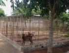 海南海口警犬训练基地