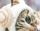 听话、乘巧的小猫。什么品种都行