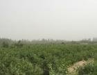 和田市吉亚乡 红枣园地出售 土地 110亩