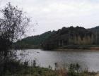 浙江省衢州常山337亩其他园地出租