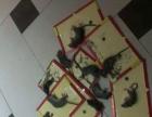 除虫,灭鼠,杀蟑螂