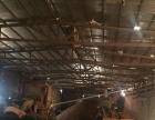 马尾区兴业东路 厂房 2800平米