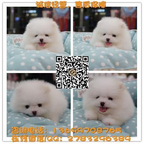 广东大型狗场 专业繁殖基地直销 三十多名犬高品质 半年售后